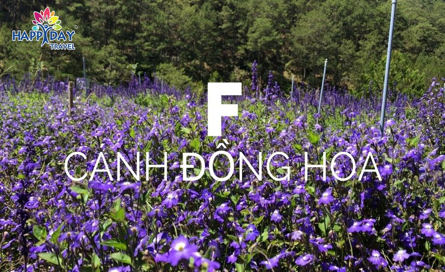 f canh dong hoa